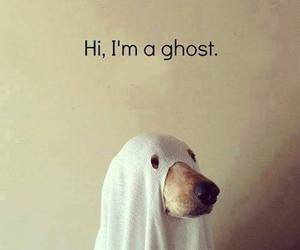 awww, dog, and ghost image