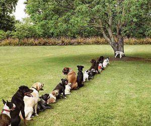 dog, funny, and tree image