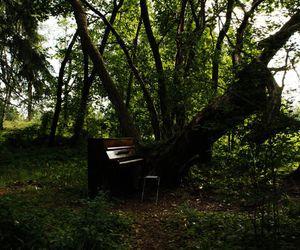 beautiful, trees, and fairytale image