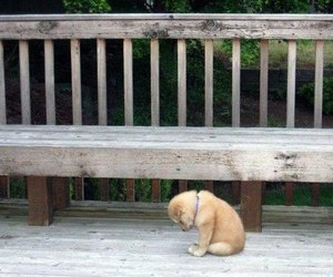 dog, puppy, and sad image