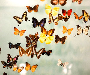 butterfly, kelebek, and Flying image