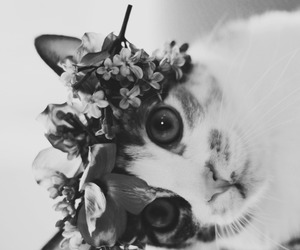 cat, flowers, and black and white image