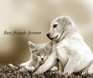 cat, dog, and best friends image