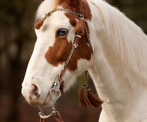 horse, beautiful, and love image