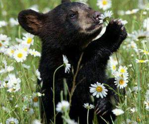 bear and flowers image