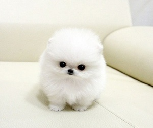 dog, cute, and white image
