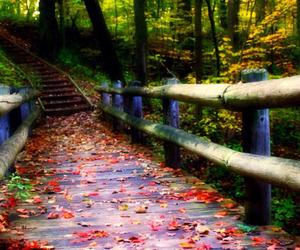 autumn, bridge, and colorful image