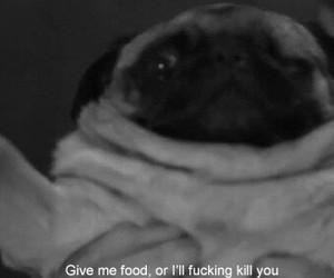 dog, food, and funny image