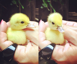 duck, yellow, and cute image