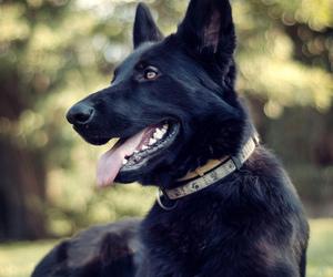 animals, true, and dog image