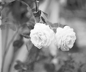 black and white, pale, and dark image