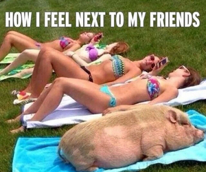 fat, pig, and funny image