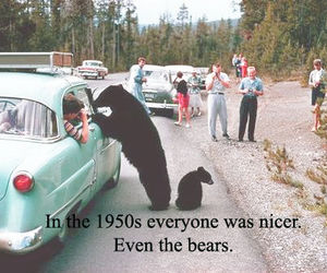bear, 50s, and funny image