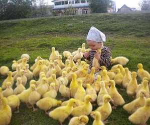 baby, duck, and animal image