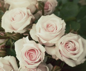 beautiful, flowers, and love image