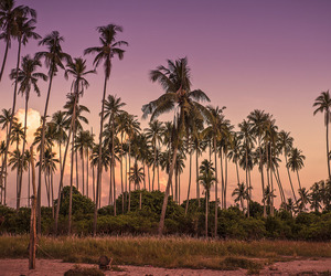 palm trees, palms, and tropical image