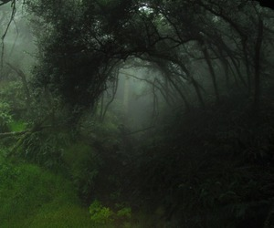 green, forest, and nature image