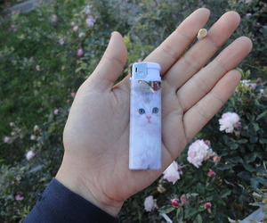 cat, lighter, and pale image
