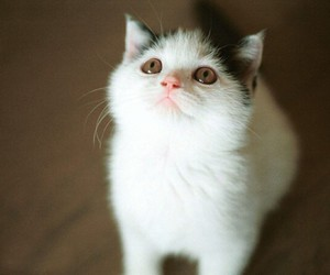 adorable, cat, and kitty image