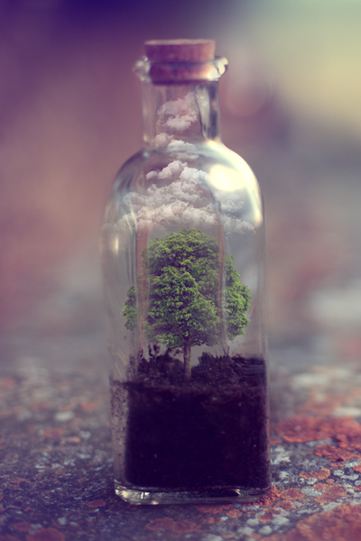bottle, clouds, and nature image