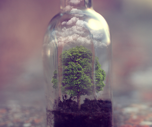 bottle, nature, and tumblr image