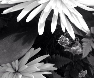 b&w, bmw, and flower image