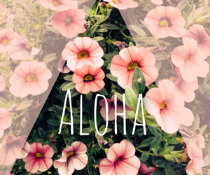 flowers, Aloha, and summer image