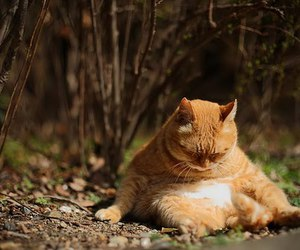 cat and fat image