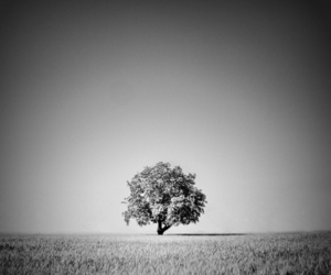 black and white, field, and nature image