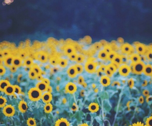flowers, arctic monkeys, and sunflower image