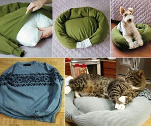 cat, sweter, and tutoriales image