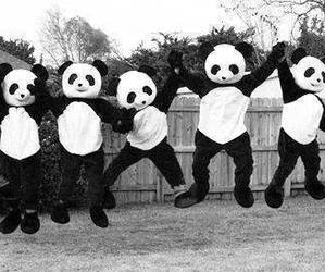 panda, black and white, and white image
