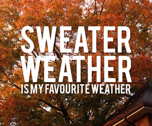 fall, sweater, and weather image