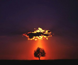 tree, clouds, and sunset image