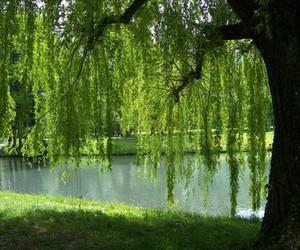 beautiful, nature, and tree image