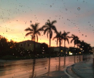 rain, sunset, and palms image