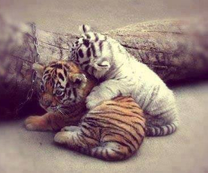 cuddle, tiger, and friends image