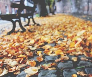 autumn, vintage, and photography image
