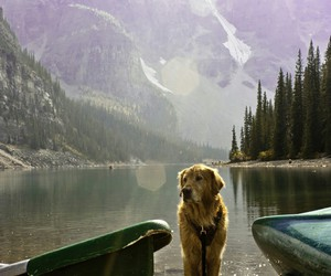 dog, nature, and lake image
