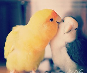 animal, bird, and cute image