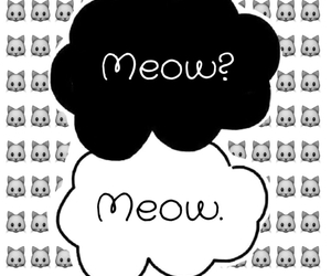 cat and meow image