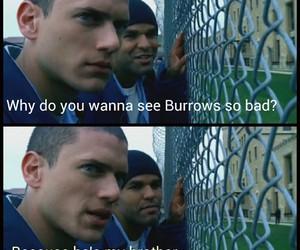 brothers, prison, and prison break image