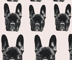 asia, dog, and Lady gaga image