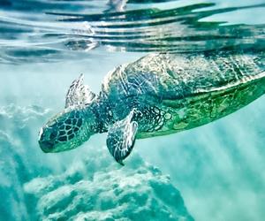 turtle, animal, and blue image