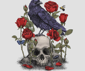 skull, rose, and bird image