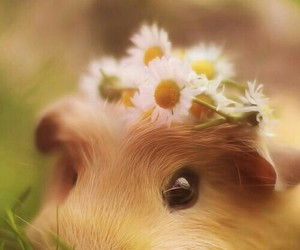 beautifull, cute, and flower crown image