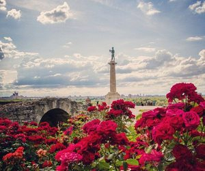 Belgrade, flowers, and red image