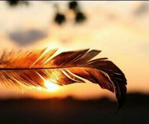 feather, sun, and sunset image