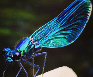blue, dragonfly, and glittery image