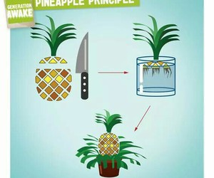 delicious, diy, and pineapple image